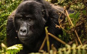 Rwanda Gorilla Safari
